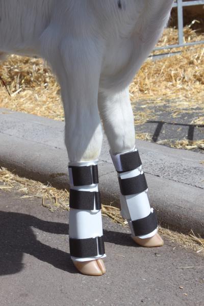 Beinschienen