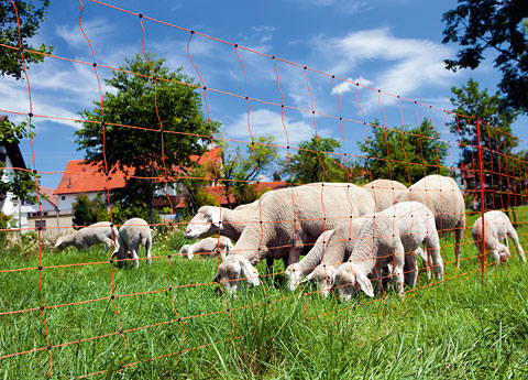 Schafnetze