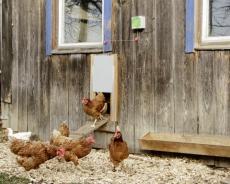 Automatische Hühnertür Komplett-Set 300 x 400 mm