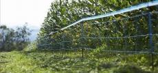 WildNet Abwehrnetz 50 m