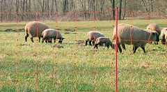 Ovinet-Schafnetz 90 cm