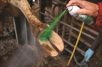 Intra Hoof fit Repiderma Spray 250 ml