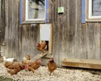 Automatische Hühnertür Komplett-Set 220 x 330 mm
