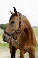 Pferdehalfter für GoLeyGo 2.0 | schwarz-fuchsia