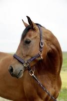 Pferdehalfter für GoLeyGo 2.0 | blau-caramel
