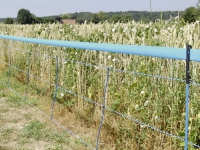Signalband für WildNet 25 mm 250 m