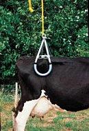 Beckenklammer Vink Hebegerät für Kühe