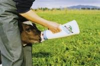 Kälberflasche Speedy Feeder 2,5 Liter