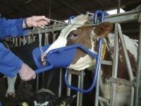Vink Kopfstütze für Kühe