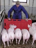 Treibebrett Pig groß für Schweine